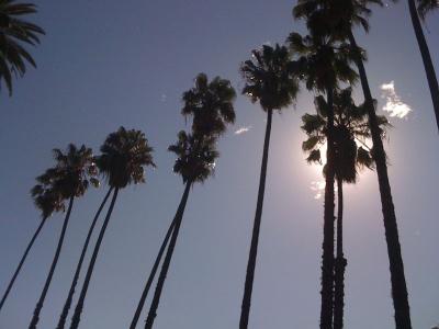 Stet-Hollywood